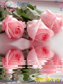 Тема для телефона Розовые розы