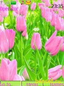 Тема для телефона Розовые тюльпаны
