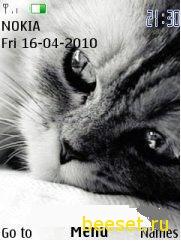 Тема для телефона Котёнок+супер меню
