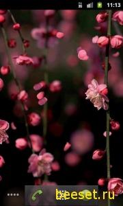 Тема для телефона Plum Blossoms - анимированные обои