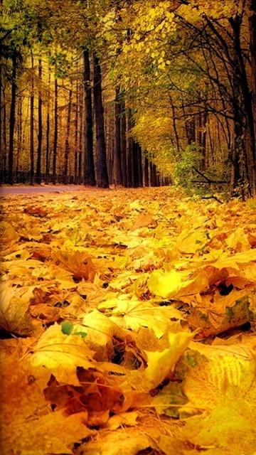Картинка Золотая осень