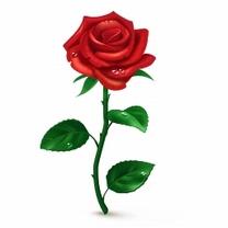 Картинка Красная роза