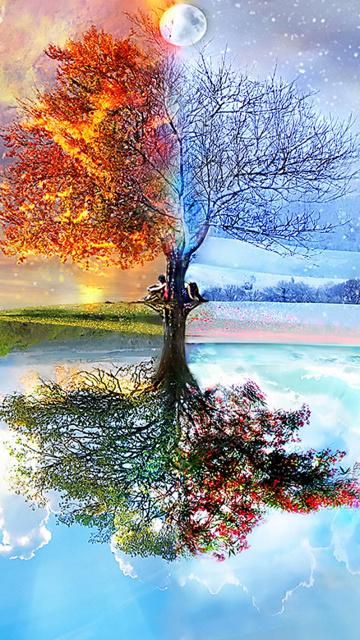 Картинка Дерево
