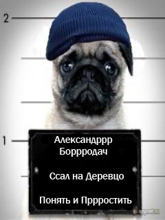 Картинка Бородач