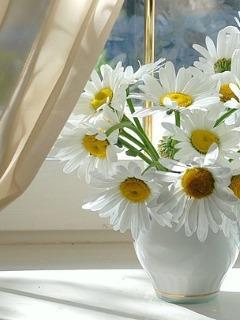 Картинка Цветы