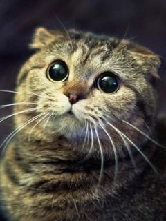 Картинка Кошка с большими глазками