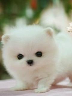Картинка Милый щенок