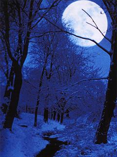 Картинка Луна и лес