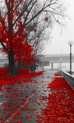 Картинка Red autumn