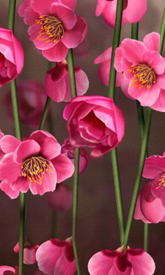 Картинка Розовые Цветы