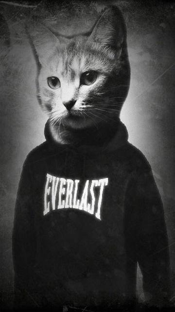 Картинка Кот + Everlast