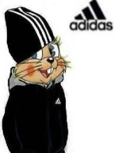 Картинка Adidas