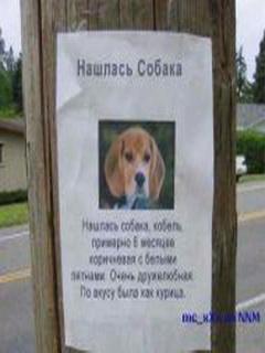 Картинка Нашлась собака