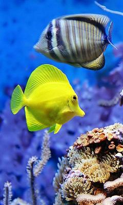 Картинка Рыбки