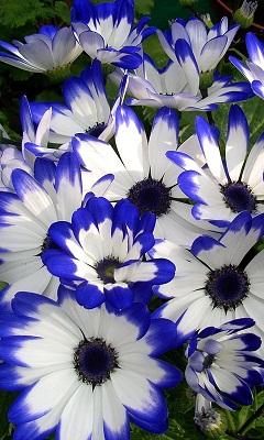 Картинка Яркие цветы