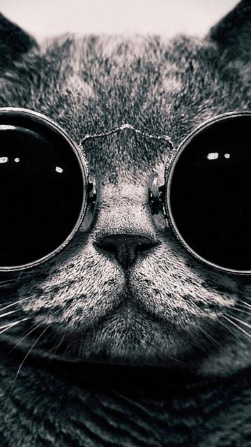 Картинка Cat