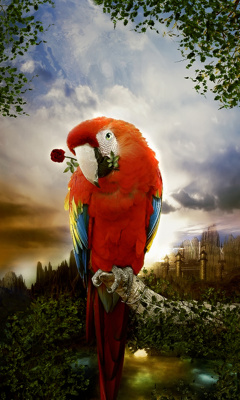 Картинка Попугайчик
