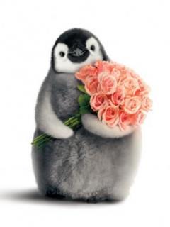 Картинка Пингвин с букетом