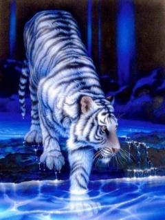 Картинка Tiger