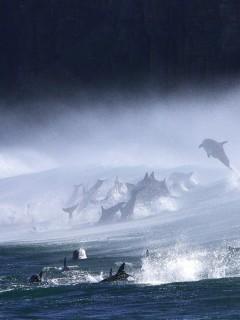 Картинка Дельфины