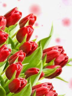 Картинка Красные тюльпаны