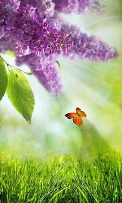 Картинка Бабочка и Природа