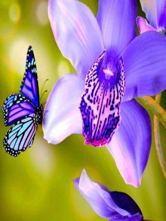 Картинка Цветок и бабочка