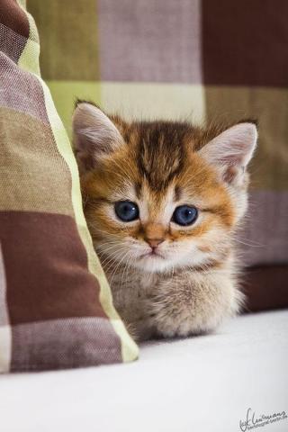 Картинка Котёнок