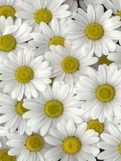 Картинка Flowers 7