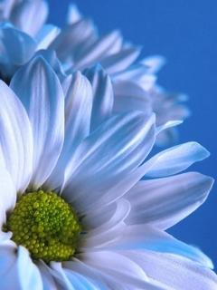 Картинка Flower n Blue