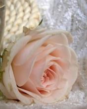 Картинка Rose