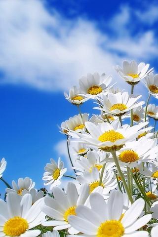 Картинка Flower spring