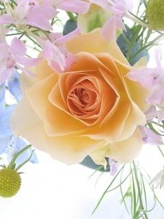 Картинка Flower