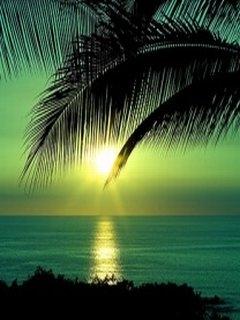 Картинка Tropical sunset