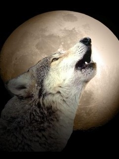 Картинка Wolf moon