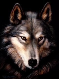 Картинка Wolf 1
