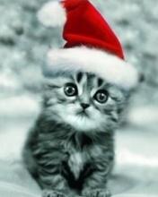 Картинка Christmas cat
