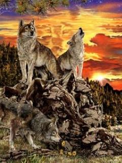 Картинка Волки