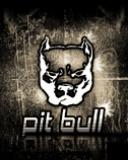 Картинка Pit_Bull