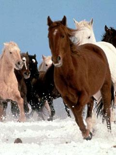 Картинка Horses