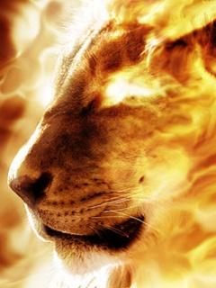 Картинка Line_Fire