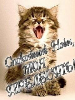 Картинка Киса