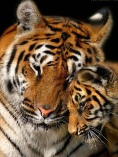 Картинка Мама и тигренок