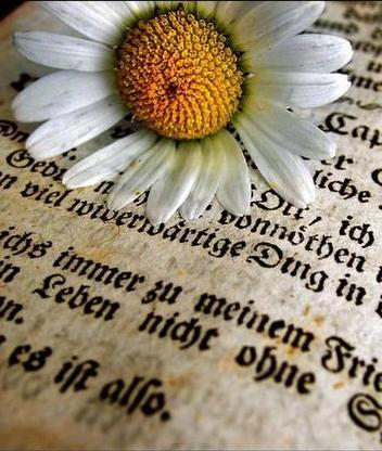 Картинка Цветок и книга