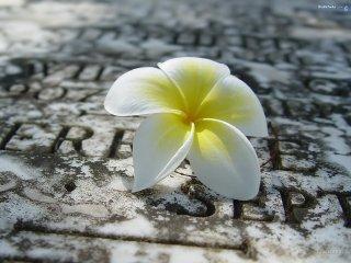 Картинка Цветок в камне