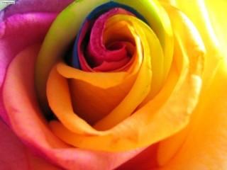 Картинка Цветок