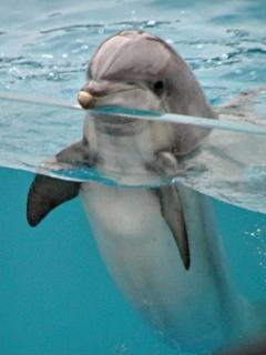 Картинка Дельфин