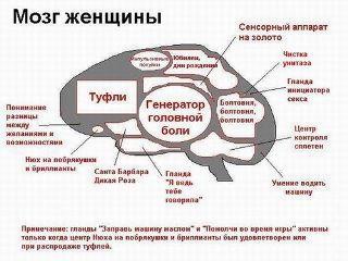 Картинка Мозг блондинки