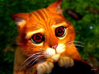 Картинка Шаринган у кота