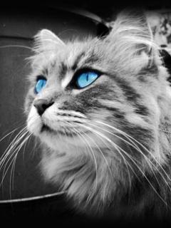 Картинка Абстрактный кот